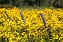 在黄色野花的领域的三个篱芭岗位 免版税库存图片