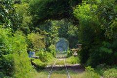 在绿色隧道的铁路 免版税库存照片