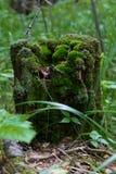 在绿色青苔的一个老树桩 免版税库存图片