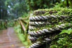 在绿色青苔盖的一个木走道 库存图片