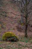 在绿色青苔盖的大岩石 免版税图库摄影