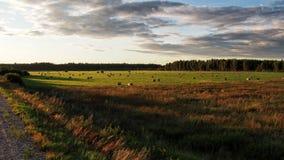 在绿色领域和森林的云彩 免版税库存图片