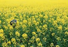 在黄色领域的一个面具 免版税库存图片