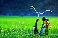 在绿色领域的一辆自行车 库存照片