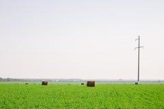 在绿色领域的干草堆 免版税库存图片