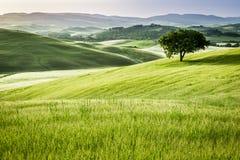 在绿色领域的日出在托斯卡纳 免版税库存图片