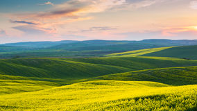 在黄色领域的日落天空 免版税库存照片