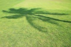 在绿色领域的椰子树阴影 免版税库存图片