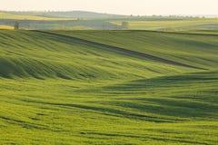 在绿色领域的温暖的晚上光 免版税库存照片
