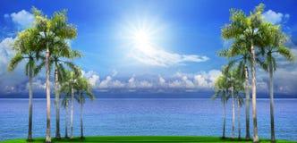 在绿色领域的美丽的棕榈树与蓝色海水backgroun 库存照片