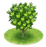 在绿色领域的苹果树 免版税库存照片