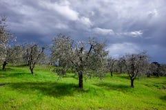 在绿色领域的风雨如磐的天空 免版税图库摄影