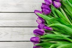 在紫色颜色的郁金香花 免版税图库摄影