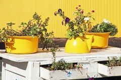 在黄色颜色的静物画 在老黄色茶壶和cas的花 库存图片