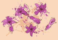 在紫色颜色的风信花花 免版税图库摄影