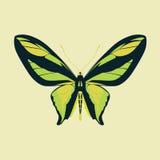 在黄色颜色背景的蝴蝶绿色翼摘要 免版税库存图片