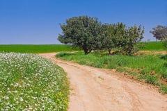 在绿色风景的农村路 免版税库存图片