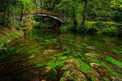 在绿色风景的石桥梁与河和树,森林在背景中, Kamenice河,在捷克国家公园, Ceske Svyc 图库摄影