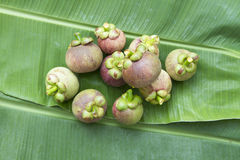 在绿色香蕉叶子的山竹果树 免版税库存图片