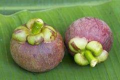 在绿色香蕉叶子的山竹果树 免版税库存照片