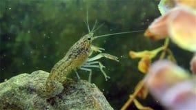在绿色水厂的小龙虾 股票录像