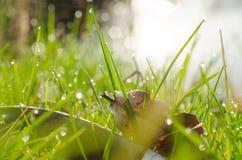 在绿色满地露水的草的干燥叶子 图库摄影