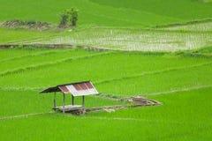 在绿色稻田的小屋 库存照片