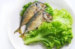 在绿色莴苣,健康膳食的Mackeral 库存图片