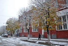 在绿色leaves_11的白色雪 库存图片