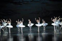在水芭蕾天鹅湖的反射 库存图片