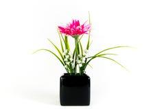在黑花瓶的桃红色大丁草花 免版税库存照片