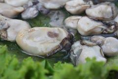 在莴苣剥皮的牡蛎 免版税库存照片