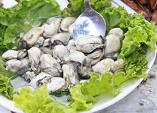 在莴苣剥皮的牡蛎 免版税图库摄影