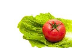 在莴苣叶子的蕃茄 免版税库存图片