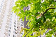 在莴苣树下叶子  免版税库存图片