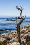 在17英里驱动的Pescadero点在大瑟尔加利福尼亚 免版税库存图片