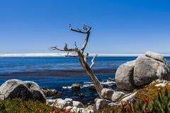 在17英里驱动的Pescadero点在大瑟尔加利福尼亚 图库摄影