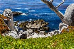 在17英里驱动的Pescadero点在大瑟尔加利福尼亚 库存照片