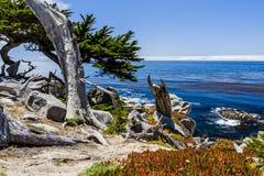 在17英里驱动的Pescadero点在大瑟尔加利福尼亚 免版税图库摄影