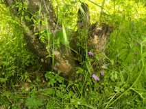 在绿草中的树桩 图库摄影