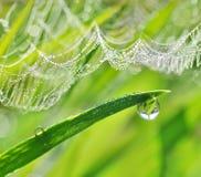 在绿草和蜘蛛网的露滴 免版税库存图片