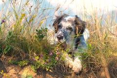 在绿草和高山和蓝天的模糊的狗在背景,自由旅行概念,拷贝空间 免版税库存照片