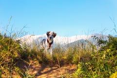 在绿草和高山和蓝天的模糊的狗在背景,自由旅行概念,拷贝空间 免版税库存图片