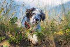 在绿草和高山和蓝天的模糊的狗在背景,自由旅行概念,拷贝空间 图库摄影