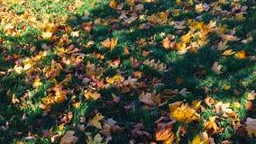 在绿草放置的秋叶 股票视频
