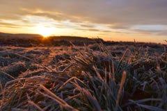 在冻草甸的日出 免版税库存照片