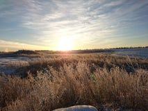 在冻草甸的日出 库存照片