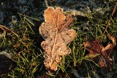 在冻草的下落的叶子 免版税库存图片