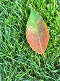 在绿草的五颜六色的秋天叶子 免版税库存照片