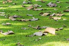 在绿草的叶子 免版税库存照片